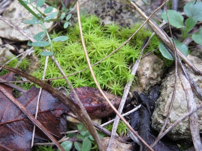 Green Mini Growth