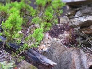 Zoe WIld Cat