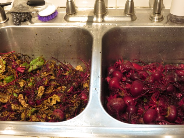 Beets in Sink