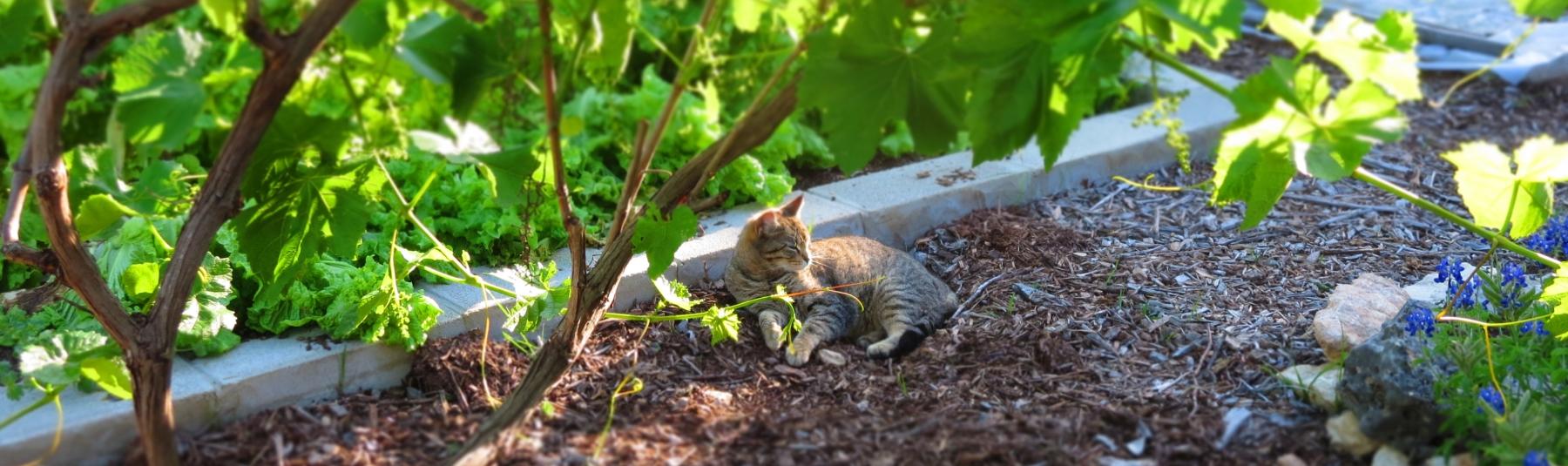Zoe in the Garden