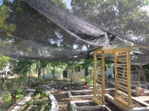 Garden in Shade